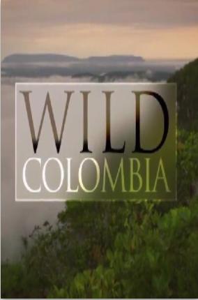 野性哥伦比亚