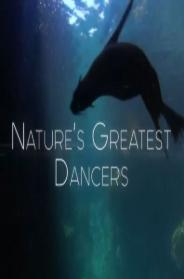 动物狂舞派